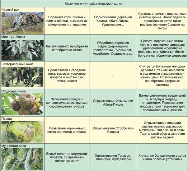 Список болезней с которыми не сажают