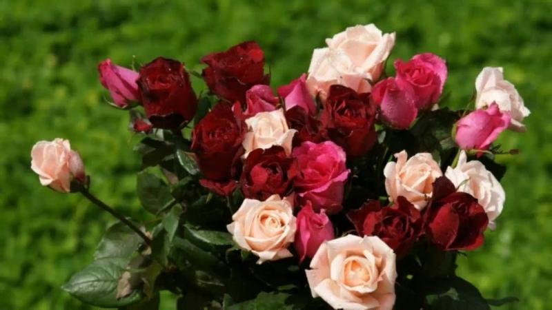 Розы для тебя.