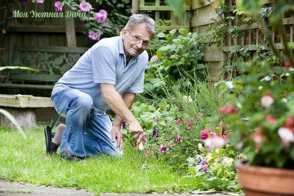 маленькие секретики (садовод-садоводу) 1. йод для капусты.в ведро воды добавить 40 капель йода. когда начнет формироваться кочан, поливать капусту под растение по 1 литру.2. ускорение