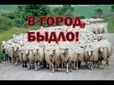 Зачем русских сгоняют в города как баранов