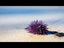 Остров Маврикий Изумрудный остров Маврикий с великолепными пляжами