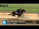 Before They Were Stars: VICAR'S IN TROUBLE at 2013 Midlantic 2YO Sale!