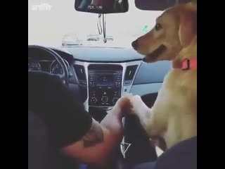 Dog holds husbands hand in front of car