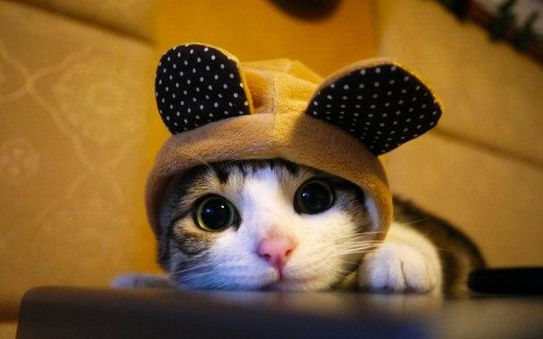 картинки котики: