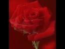 Doc137343663_465558395.mp4