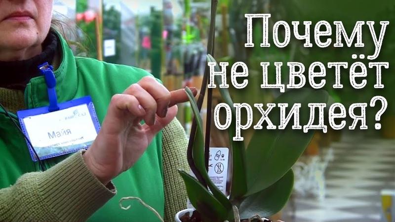 Почему не цветет орхидея фаленопсис? Советы и рекомендации по уходу