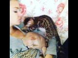 Таких не бывает ? нереальная !!! Игривая, спит на мне, целуется, разговаривает, песни мне поет ????????? я вообще кошек не особо люблю но это чудо ? просто чудо ??