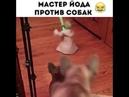 Мастер йода против собак