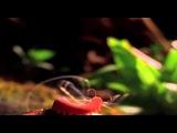 Один из лучших роликов о природе