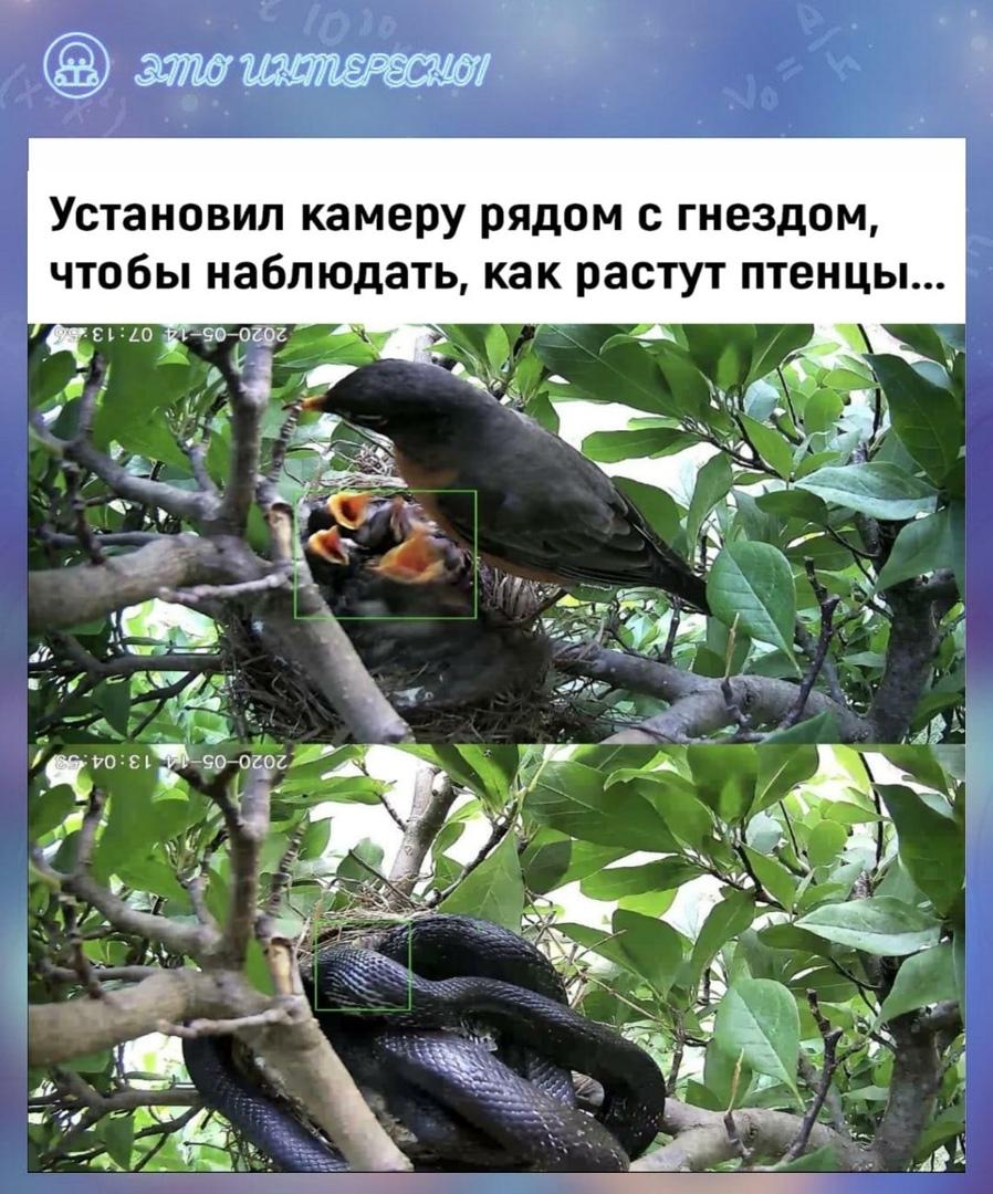 Смотреть на это больно, но природа беспощадна ????