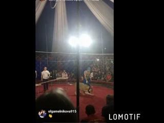 На Кубани в цирке львица напала на 3-летнюю девочку (Barnaul22)