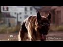 Классный клип по 15 серии Сериала - Пёс