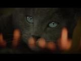 Караоке кот – «Пять причин» (реклама, но няшная) .