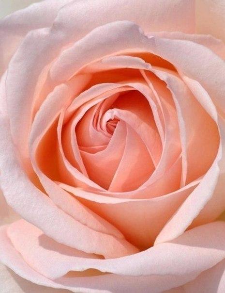Роза рождается розой она не превратится