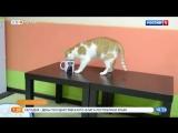 Утренние забавные животные - кошка Ася и ее чашка