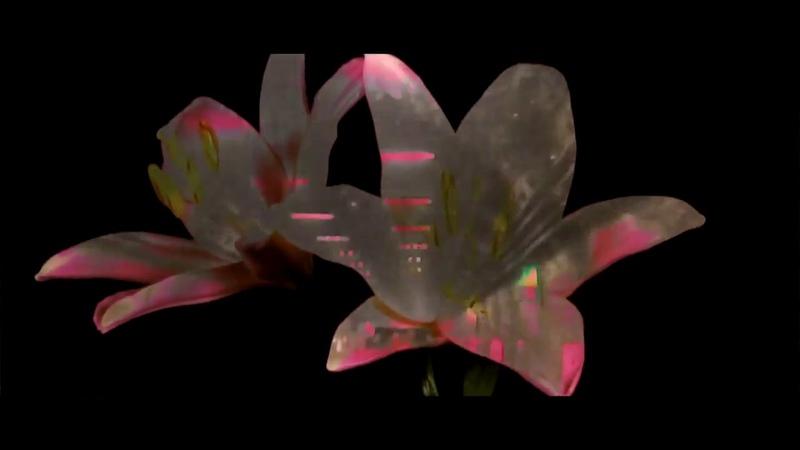 Tom Demac Real Lies White Flowers (Edit) (Official Video) » Freewka.com - Смотреть онлайн в хорощем качестве
