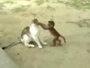 Komik kedi ve maymun