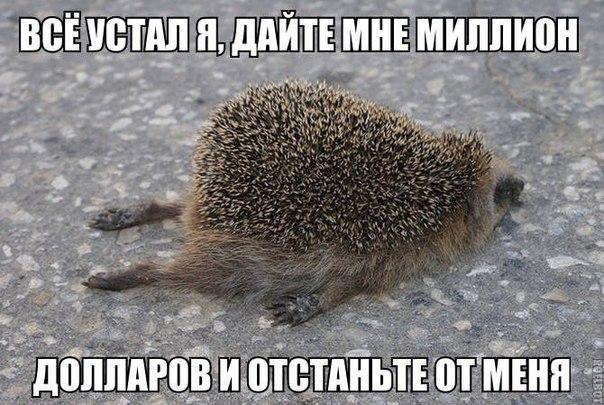 Фото №429912508 со страницы Натальи Кожуховой