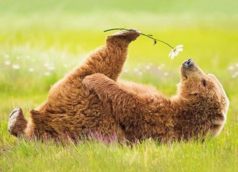 Медведь с цветами картинки 4
