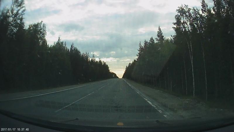 Мишка на дороге. Карелия.