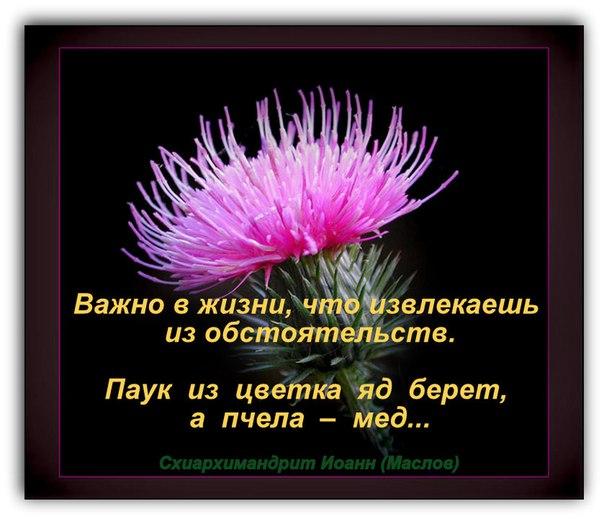 https://pp.userapi.com/c846020/v846020235/13d2e0/8cxE8tGRYWc.jpg