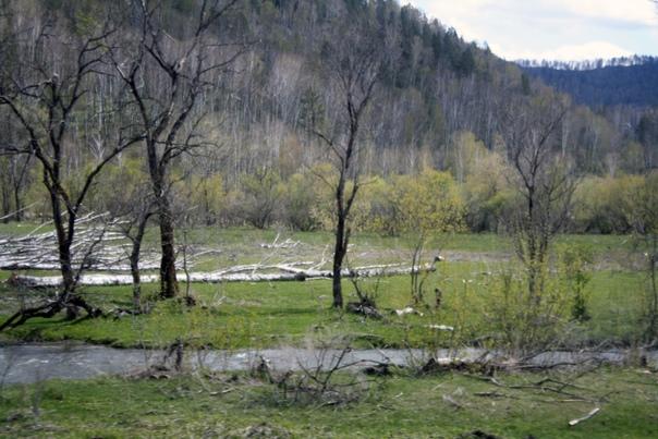 Пока что почему-то много валежника. В следующий раз я увижу бесхозные деревья только у Телецкого озера.