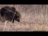 Жизнь в тайге на Дальнем Востоке  Часть 8  Притравка собак на медведя  Межрайонная выставка клуба 'С