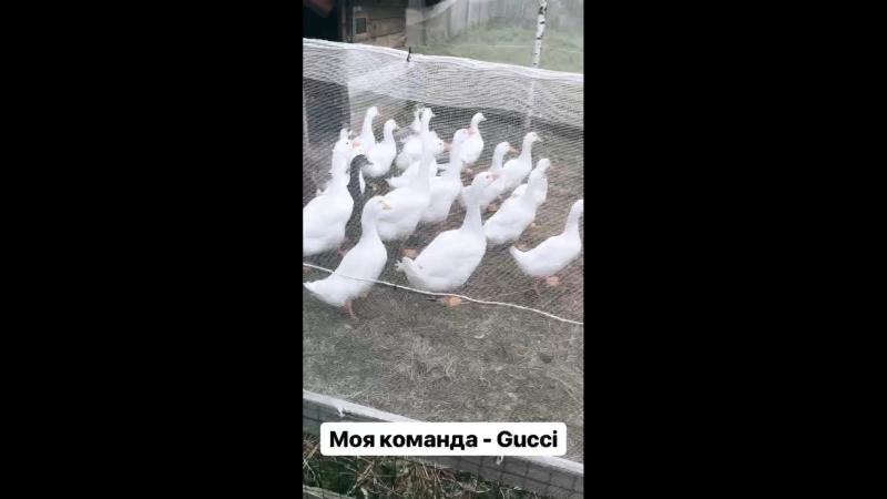 Моя команда - Gucci
