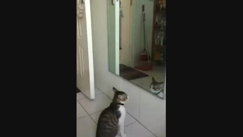 Порхай как бабочка, жаль что ты кот