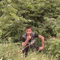 محمدالشيخكي
