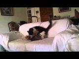 Кот грызёт собачку Cat bites dog