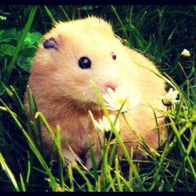 Smelly Hamster, 1 августа , Москва, id229255298