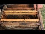 Как сделать отводок,как подсадить матку в улей.