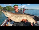 GIANT Lake St. Clair Pre-Spawn Musky- UNBELIEVABLE CATCH!