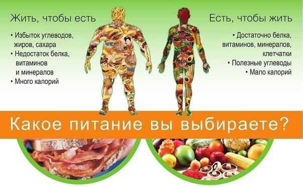 правильное питание в первом триместре