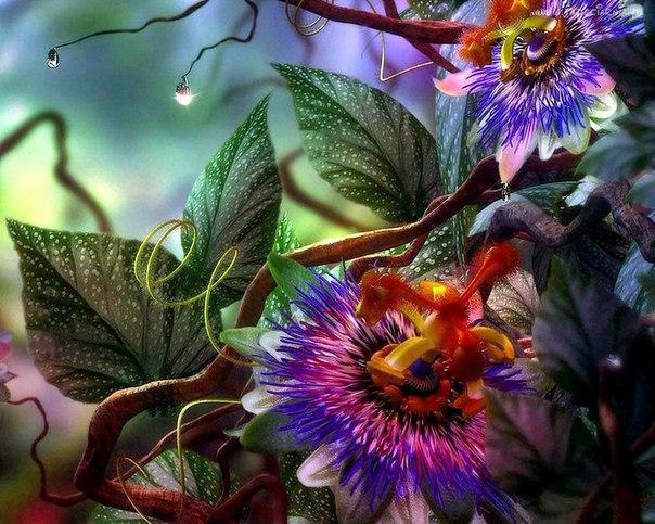 Какие растения защищают от порчи и сглаза