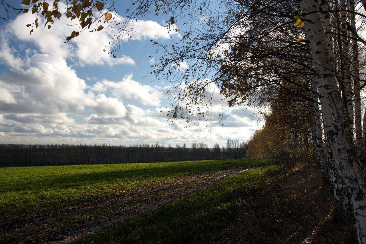 Лес, поле, дорога