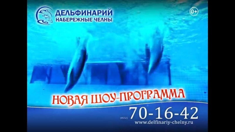 Каникулы Новая шоу программа в Челнинском дельфинарии