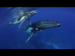 Фридайвинг с китами