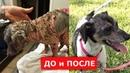 Страшная болезнь кожи у собаки.Вы не узнаете ее после лечения.Ветеринарное ранчо