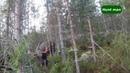 Охота на косулю и лося