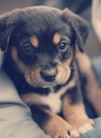 породы собак красивые фото