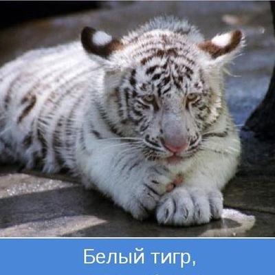 Андрей Пасишнюк, 26 апреля 1978, Харьков, id25633281