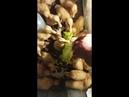 Sevimli ördek yavruları.ördek yavrusu bakımında dikkat edilmesi gereken nokta açıklamadadır
