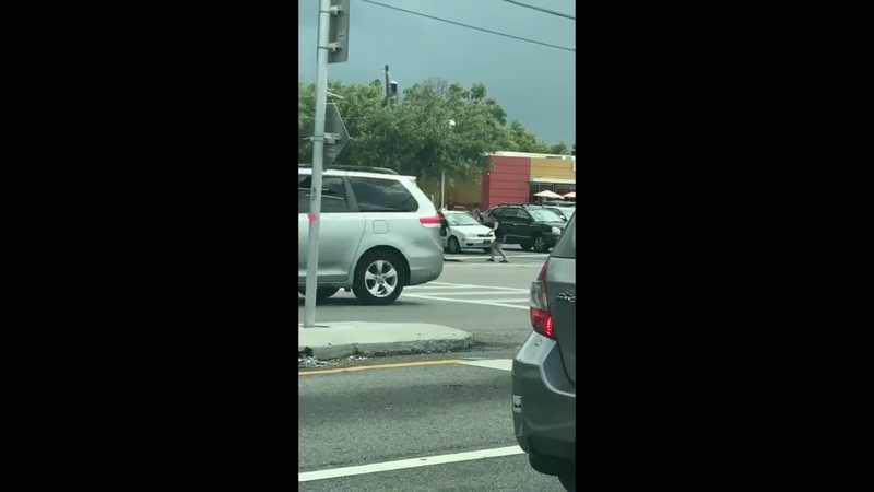 Two Women Help Gator Navigate Busy Intersection in Florida