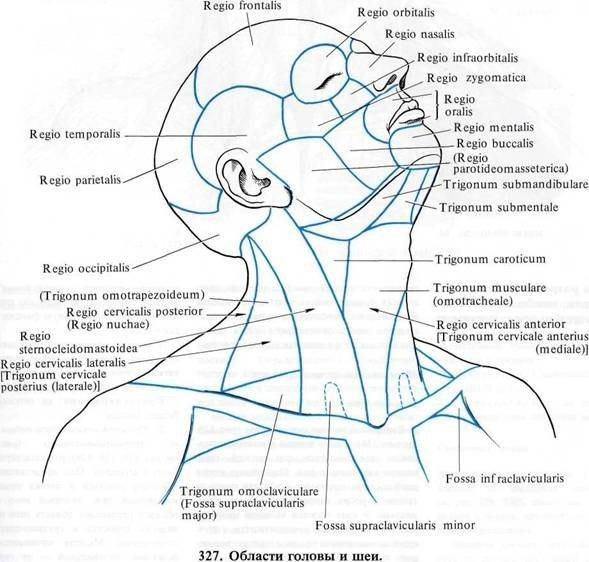 области лица и шеи