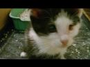 Котенок МОСЬКА (видео 2)