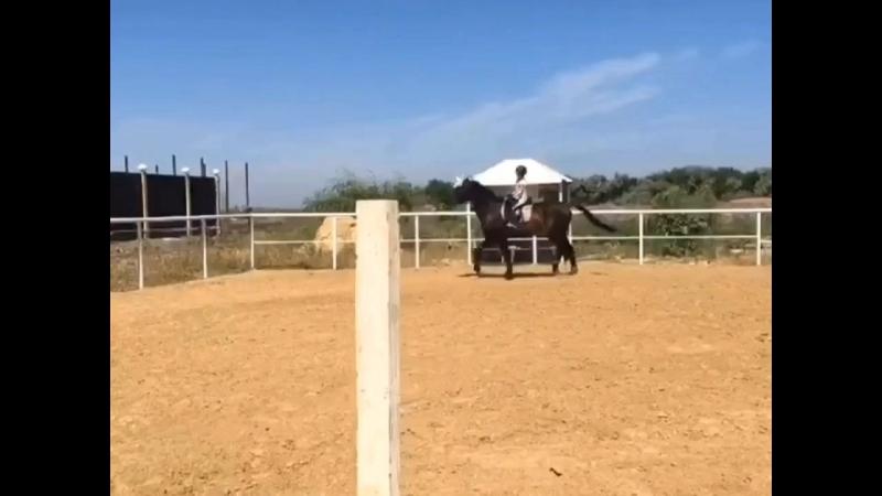 Я и мой верный конь Интервал🐴🏇