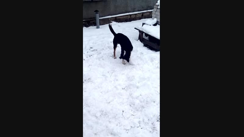 Хотел слепить снеговика D