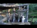 Легендообразущийся мост на р. Ворона